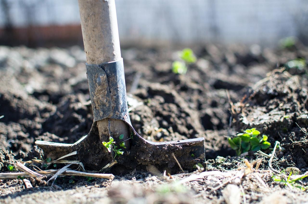 making a vegetable garden